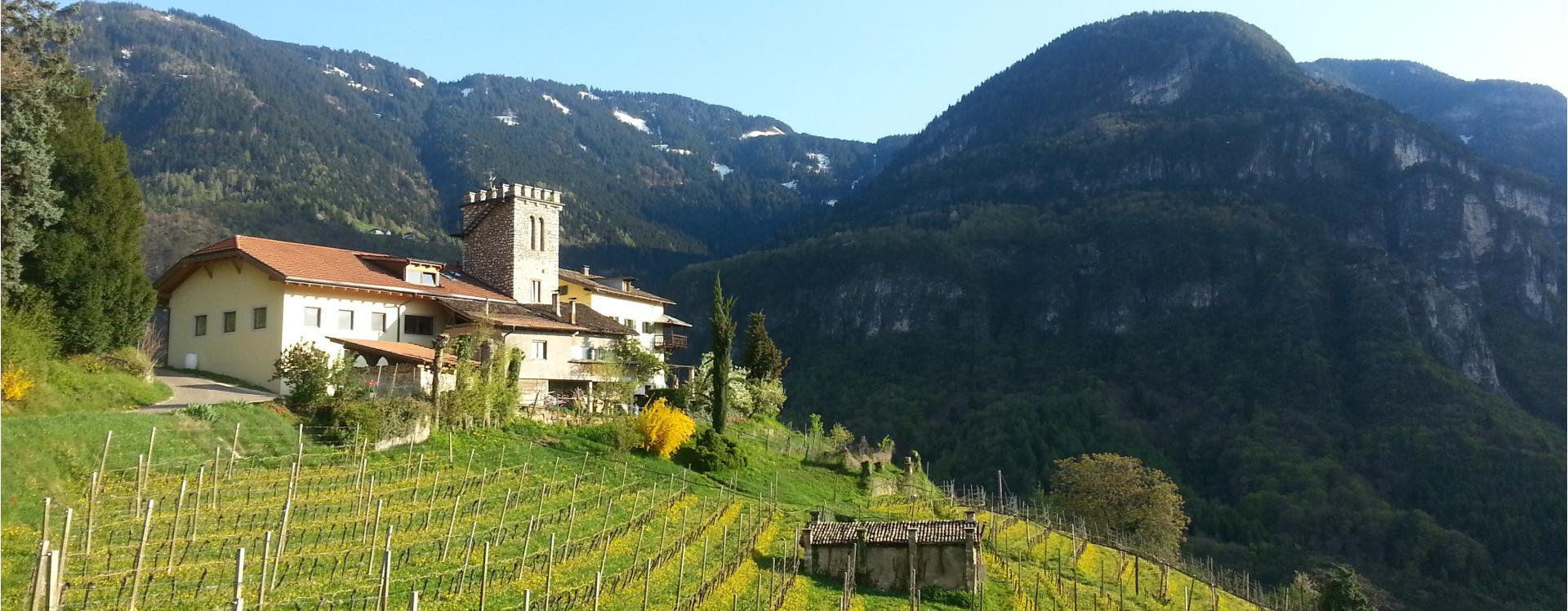 Maso Thaler, vino, Alto Adige
