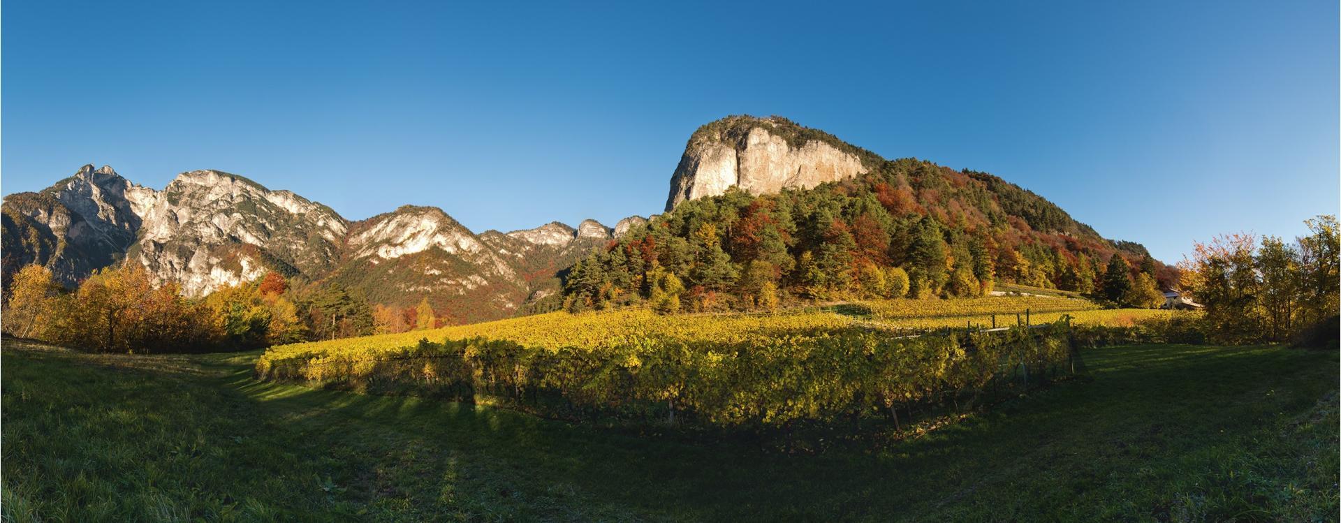 Fennberg Panorama, Weingut Tiefenbrunner